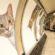 Сите реклами во Лондонската подземна станица заменети со слики од мачки