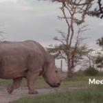 Како Ogilvy стана дел од светските наслови со помош на еден носорог и Tinder?