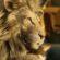 """IKEA и еден пријателски настроен лав """"Одмараат"""" во оваа нова реклама"""