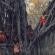 Одлична кампања за последните преостанати автохтони култури во светот