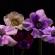 Едноставно и спектакуларно – оваа трпеливо создадена реклама трансформира цвеќиња во огномет